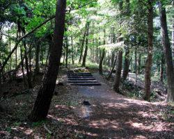 自然観察の森