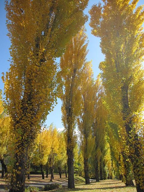 トリム広場(秋)