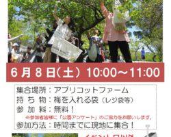 「梅もぎ体験」イベント開催!