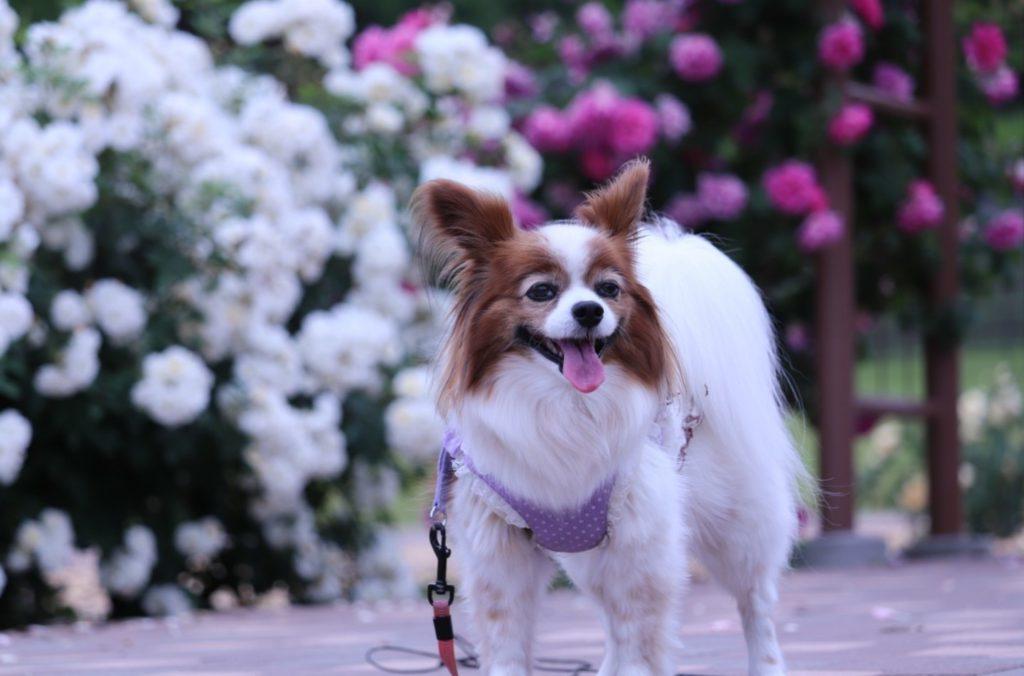 楽しいお散歩♪